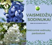Prekyba, obelų, vyšnių, slyvų, trešnių, persikų, kriaušių, abrikosų, šilauogių sodinukais-0