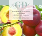 PARDUODAME VAISMEDŽIŲ SODINUKUS: TREŠNĖS, VYŠNIA, ABRIKOSAI, NEKTARINAI, SLYVA, AKTINIDIJA el. parduotuvėje www.Greendreams.lt-0