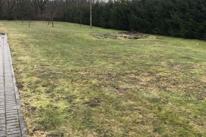 40 arų ploto vejos atnaujinimas-0