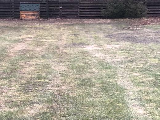 40 arų ploto vejos atnaujinimas-3