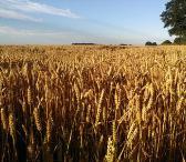 Išnuomojamas 7,3ha  žemės ūkio sklypas Ukmergės raj.-0
