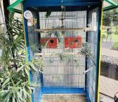 Parduodamas tvirtas narvas pauksčiam-0