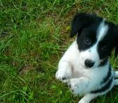 Dovanoju 1,5 mėn. šuniukus-0