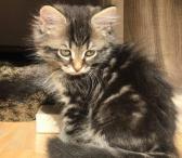 Sibiro kačiukai-0