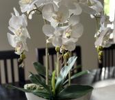 Dirbtinė orchidėja-0