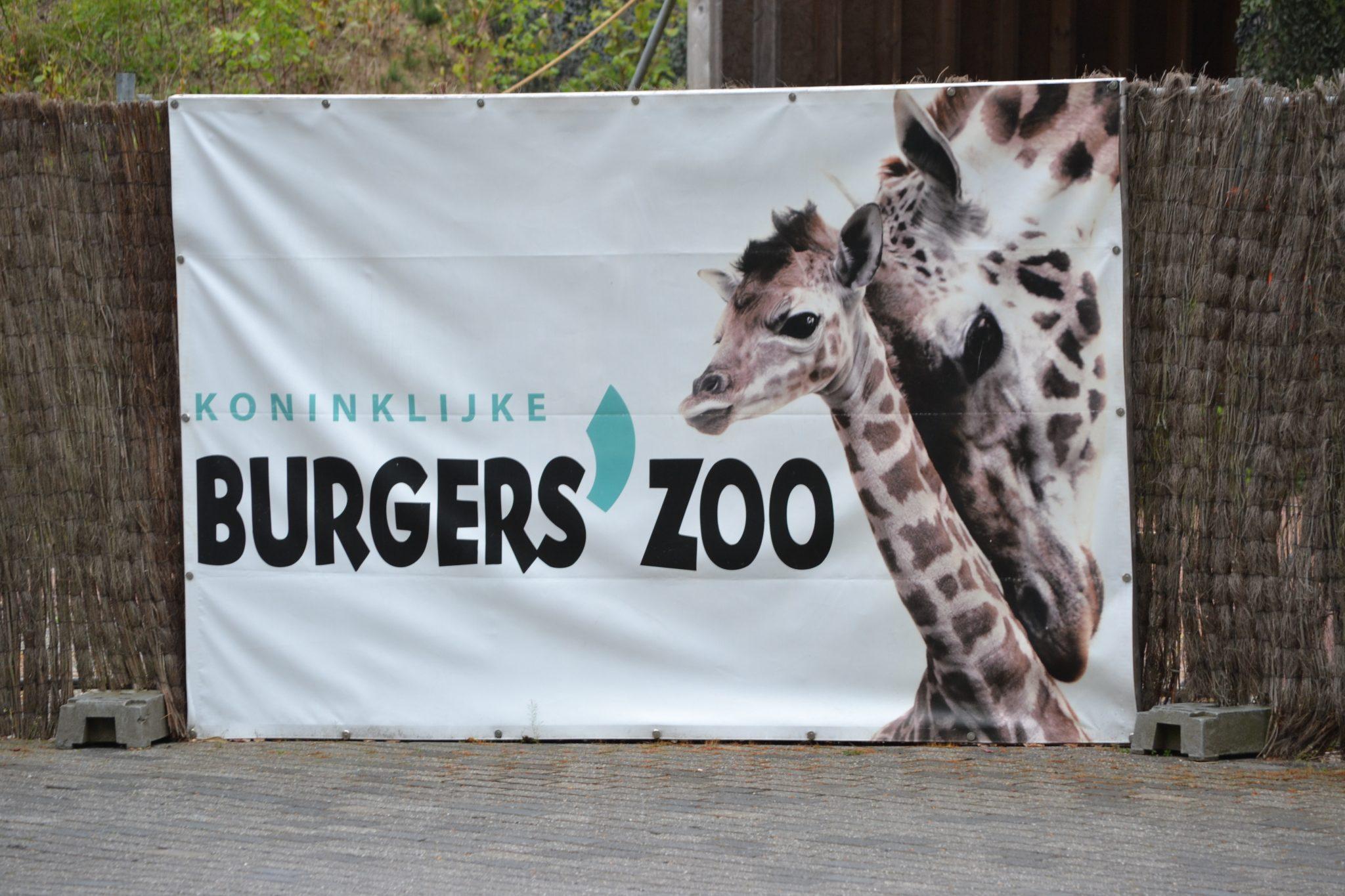 Alte neue Erinnerungen: Burgers Zoo in Arnheim