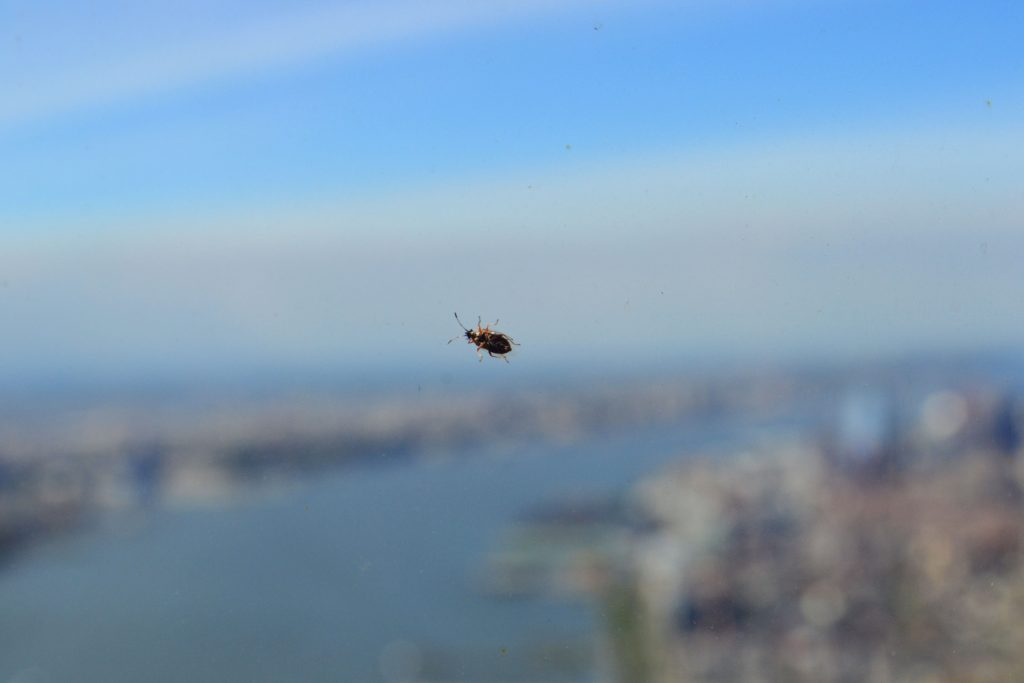 5 Lieblingsbilder | New York - One World Observatory 1 1024x683