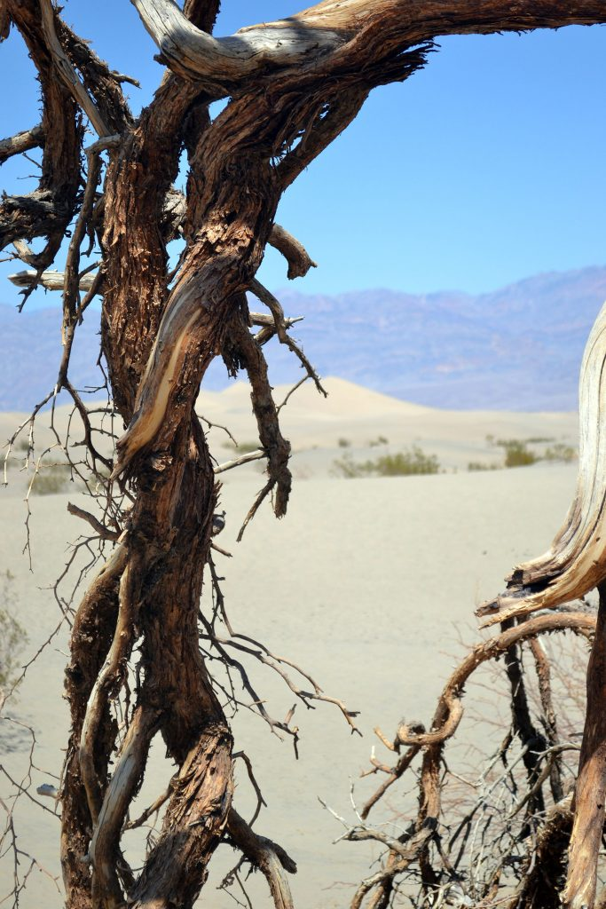 Travel Diary: Death Valley | USA Roadtrip - Death Valley 8 683x1024