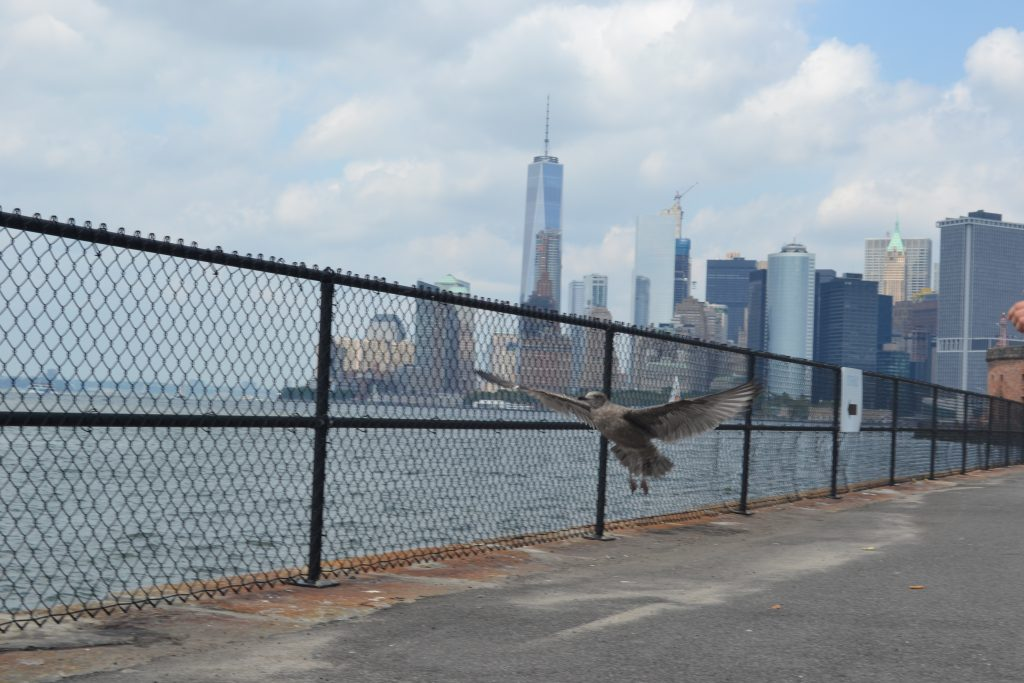 Travel Tip: Governors Island // New York City - DSC 0705 1024x683