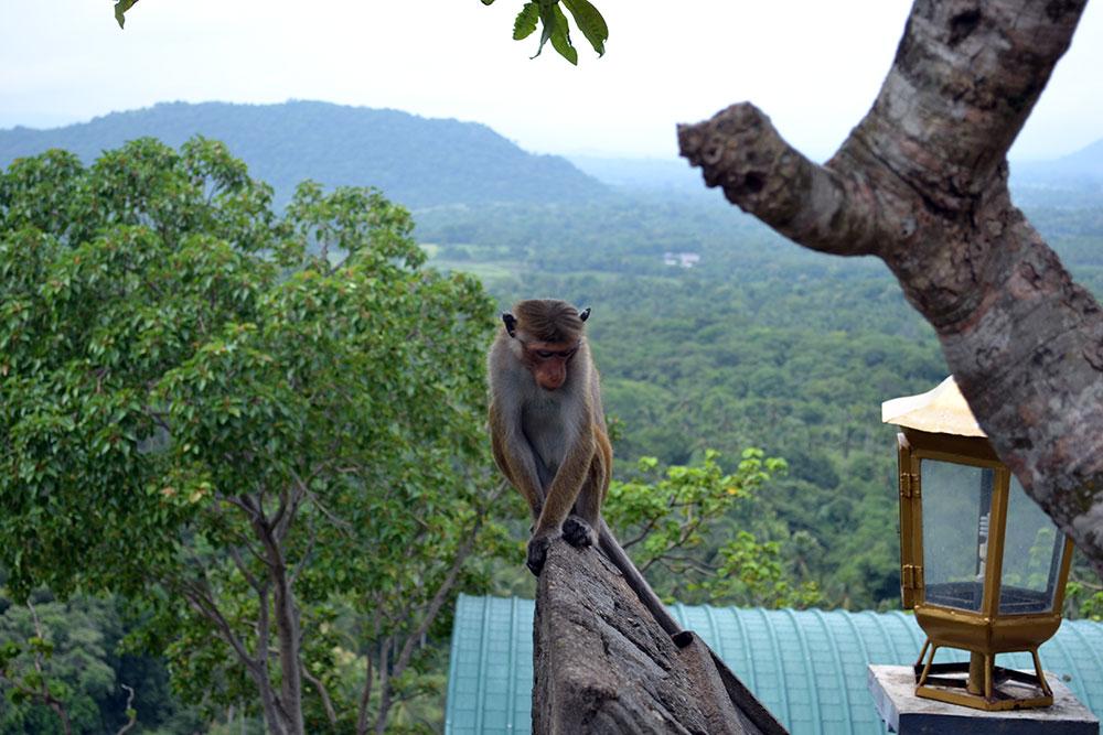 Travel Diary: Sigiriya, Polonnaruwa & Dambulla | Sri Lanka - Sri Lanka Deel 1 1
