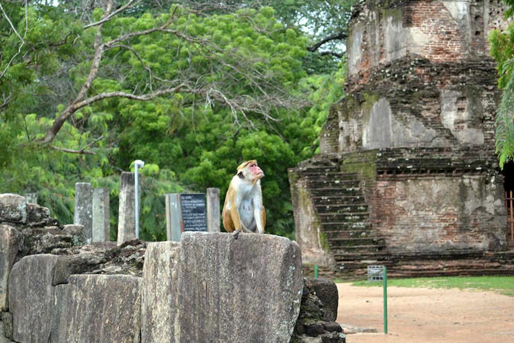 Travel Tip: Reiseroute Sri Lanka - Sri Lanka Deel 1 6