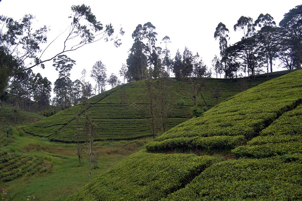 Travel Diary: Nuwara Eliya | Sri Lanka - NuwaraEliya 4