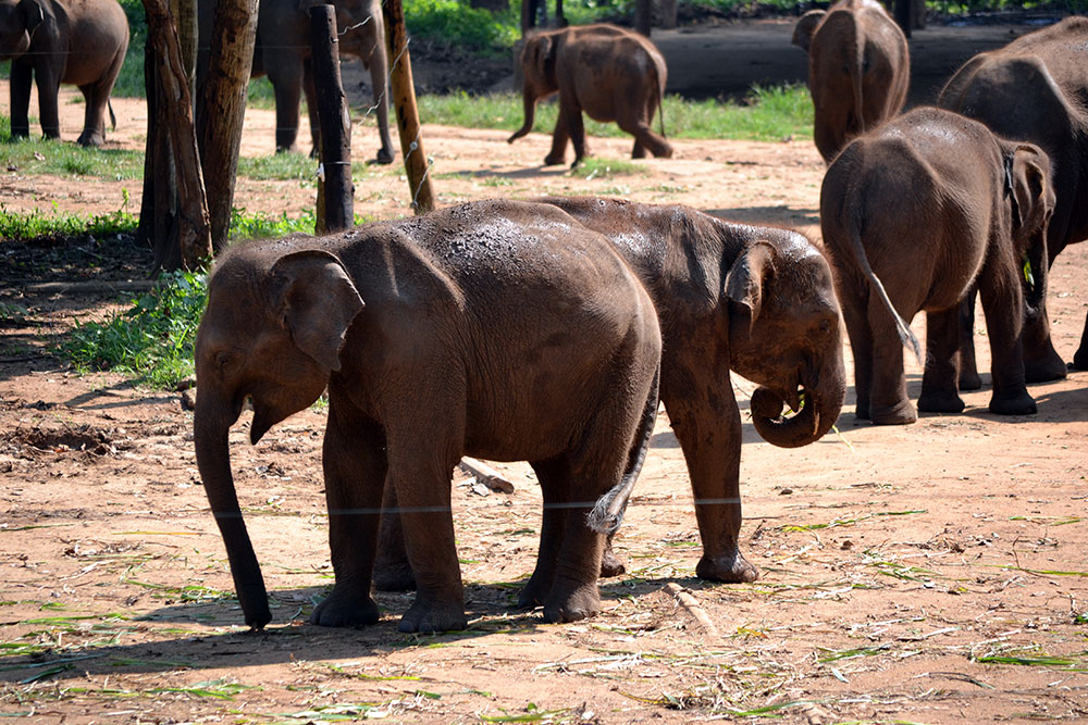 Travel Diary: Yala Nationalpark | Sri Lanka - Yala 3
