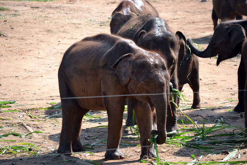 Travel Diary: Yala Nationalpark | Sri Lanka - Yala 4