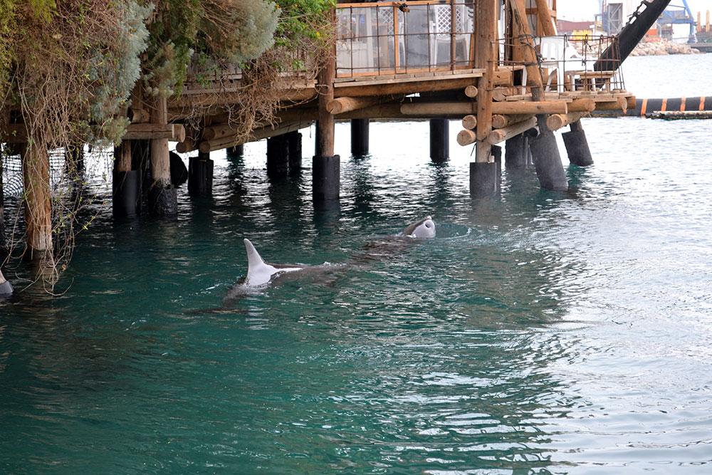 Travel Diary: Eilat & Rotes Meer | Israel