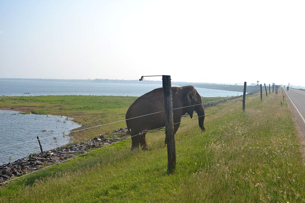 Travel Tip: Wildtiere beobachten auf Reisen | Dos & Don'ts - Yala 1