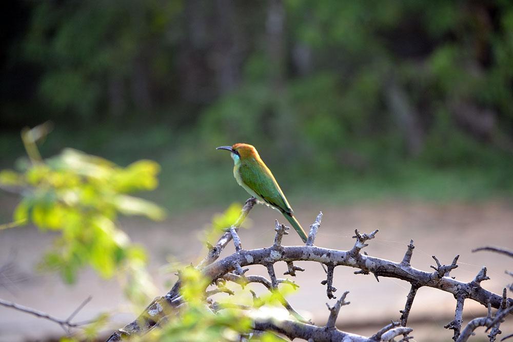 Travel Tip: Wildtiere beobachten auf Reisen | Dos & Don'ts - Yala 9 2
