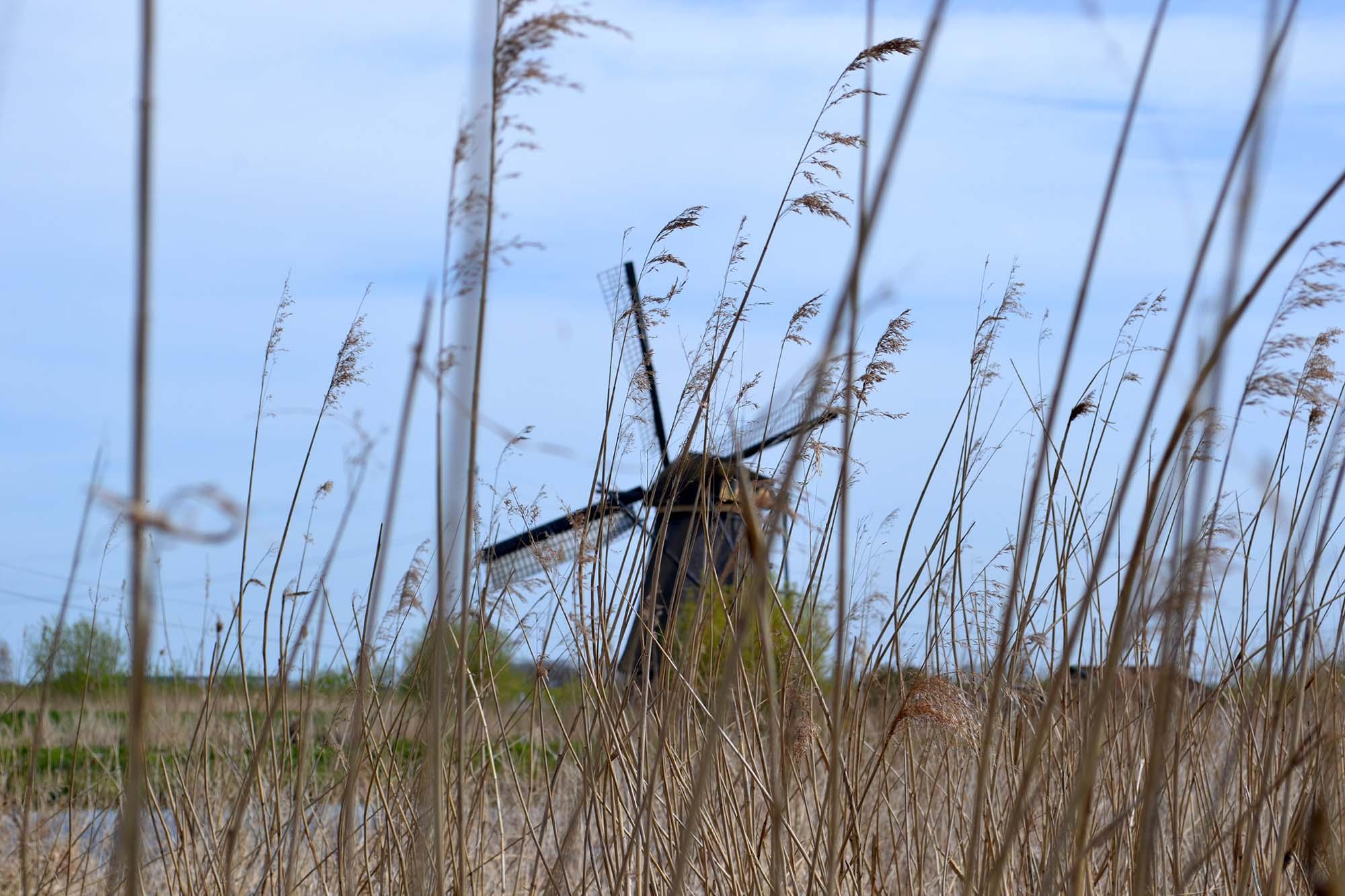 Travel Tip: Die Windmühlen von Kinderdijk   Niederlande - Kinderdijk 4