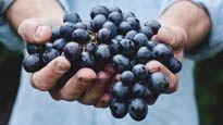 Vin på naturens villkor