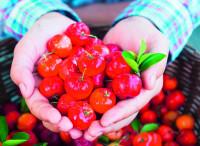 Bösch Boden Spies bietet Acerola-Püree mit erhöhtem Vitamin-C-Gehalt