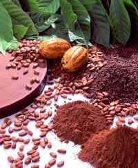 Kakao – eine leckere  Quelle für Vitamin D