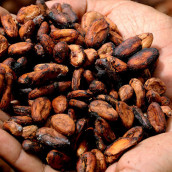 Image: European Cocoa Association