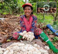 Eine Kakaobäuerin auf Seram, der Hauptinsel der indonesischen Provinz Maluku. (Foto: Olam Cocoa)