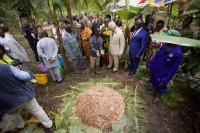 The Prince of Wales visiting an model cocoa farm in Ghana.