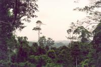 Rainforest in Ghana.