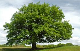 C452 290 Vorteile Massivholz