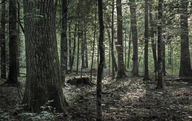 Wald Eiche