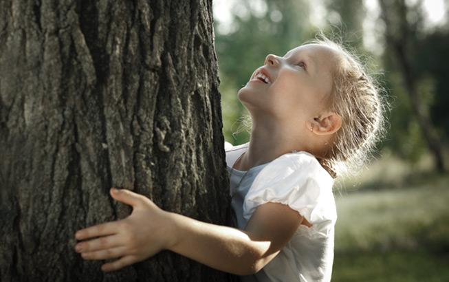Baum Natur Holz Wald