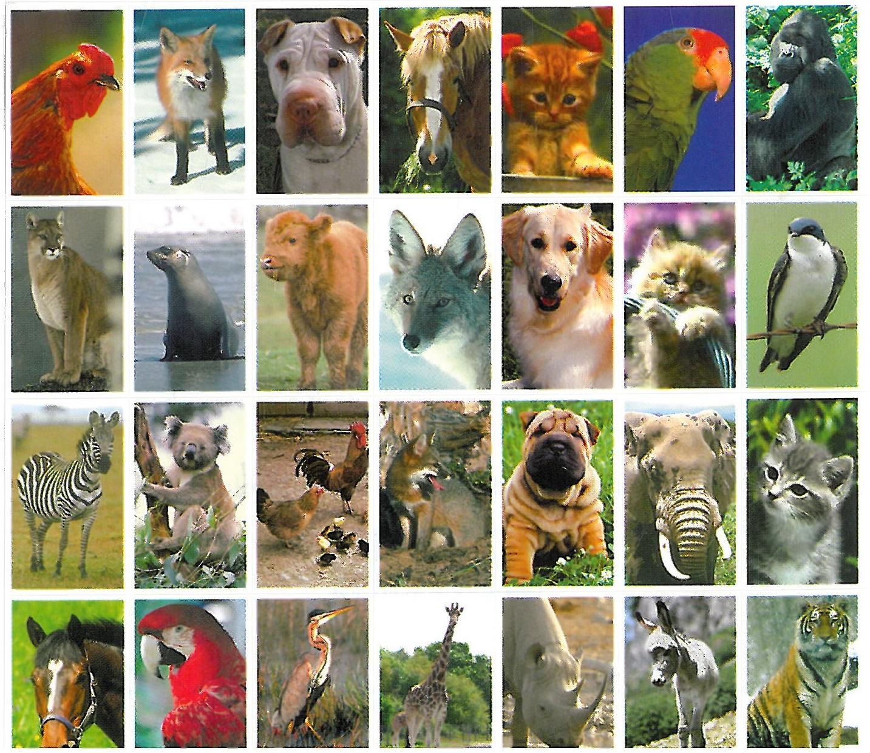 dieren serie 41