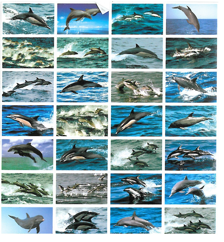 dolfijnen serie 135