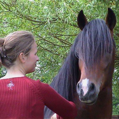 Hoe beloon je best je paard?