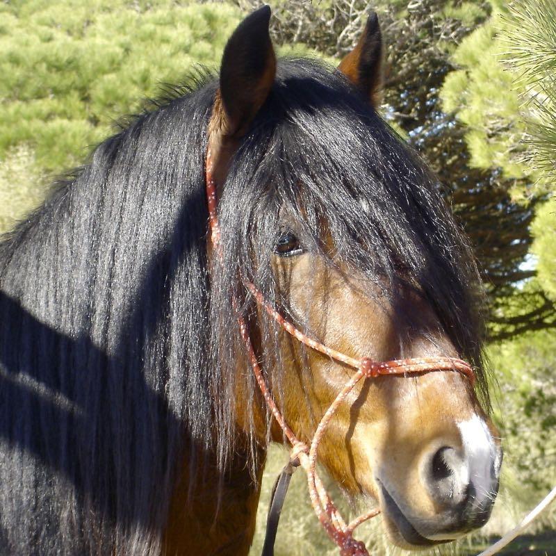 Wat is de gemiddelde levensverwachting voor mijn paard?