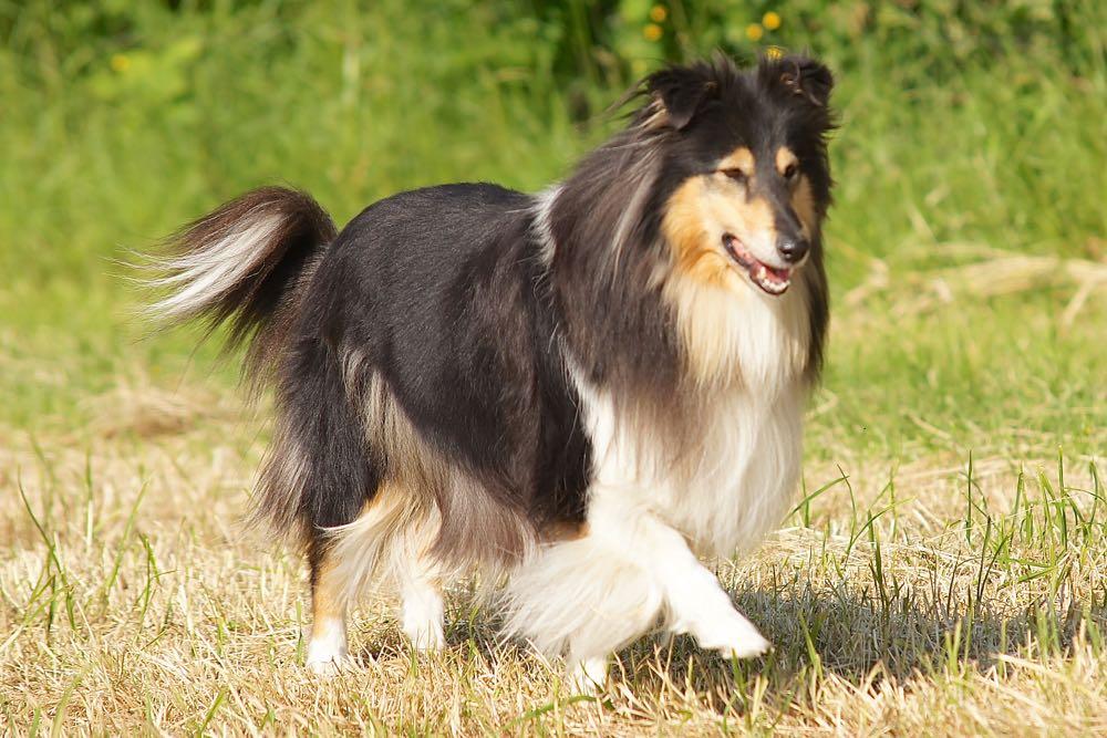 Toffe reactie van Ingeborg op gebruik van FLEX bij honden en haarzelf.