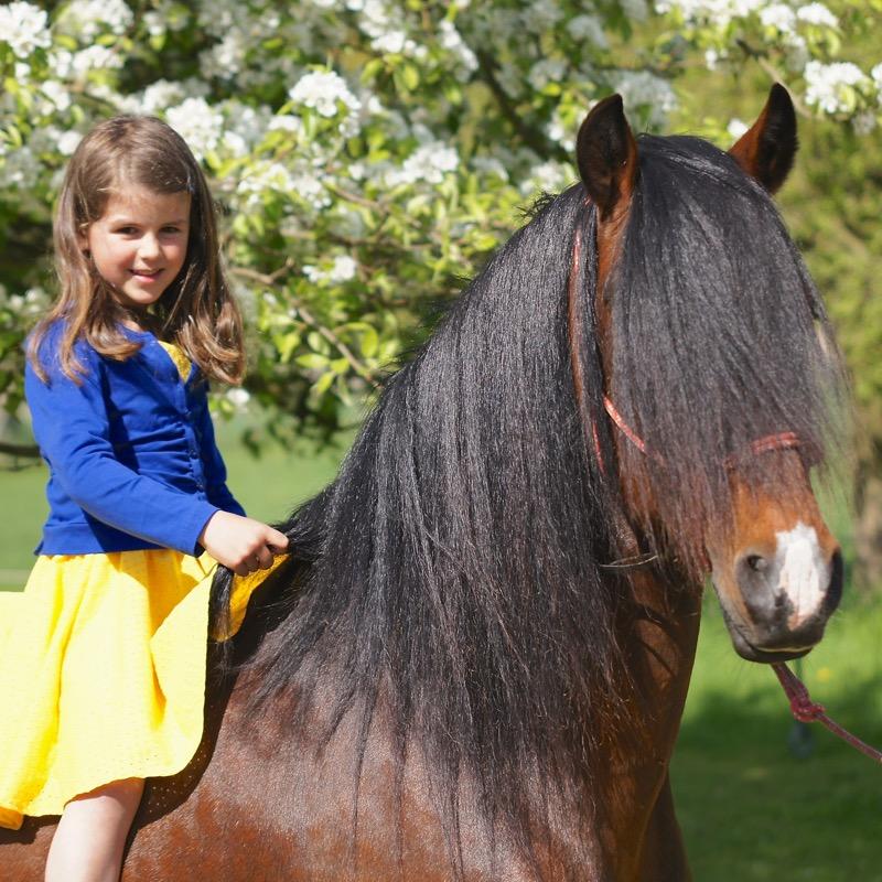 Kan je de levensduur van je paard verlengen?