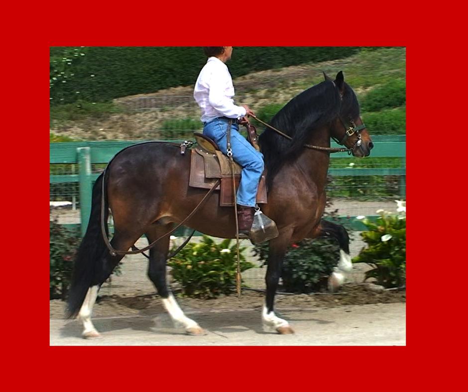 Gelukkig voor onze paarden is er FLEX GOLD!!