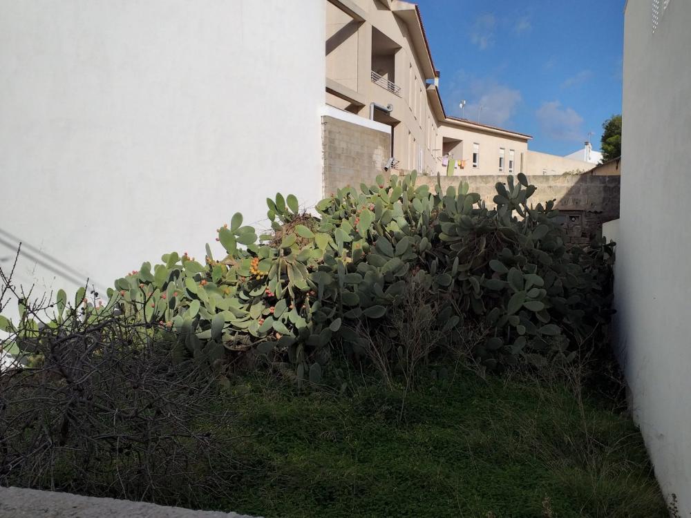 ciudadela de menorca menorca plot foto 3522117