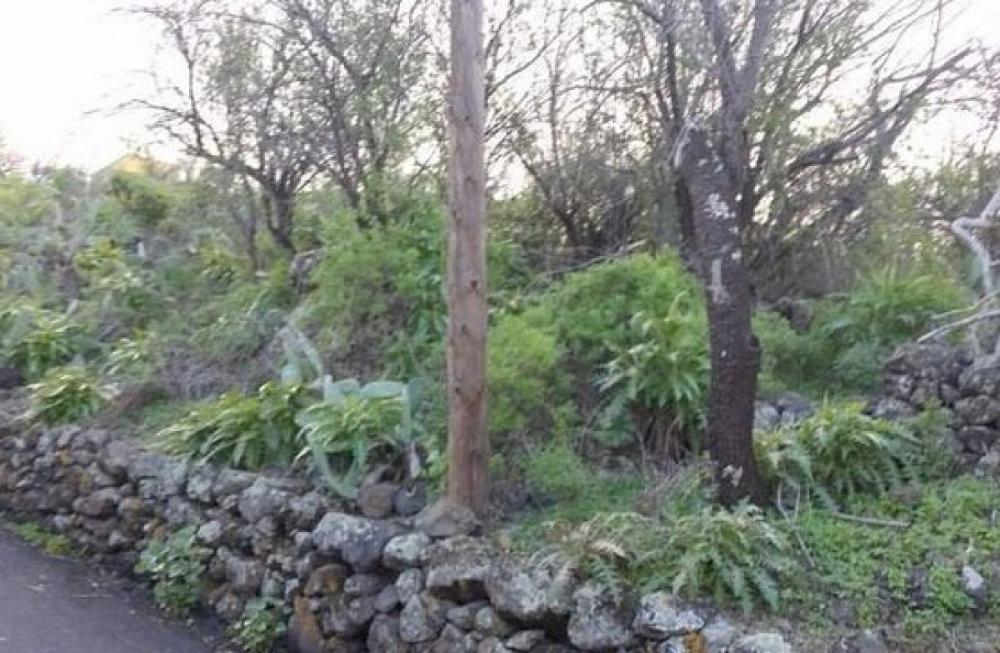 el pilar la palma tomt foto 3596493