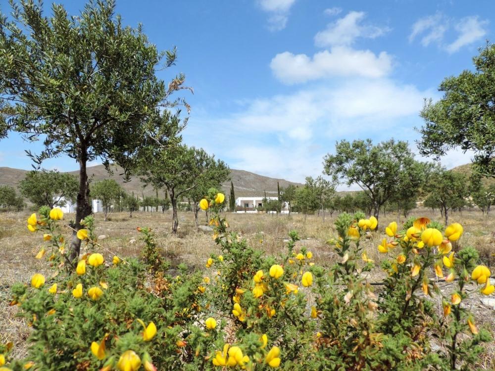 tabernas almería boerderij foto 3706904