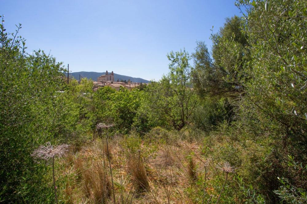 calvià mallorca Grundstück foto 3745958