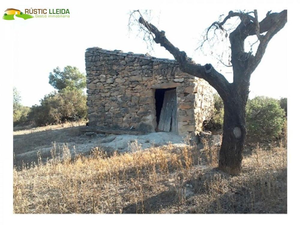 les borges blanques lleida hus foto 3783372