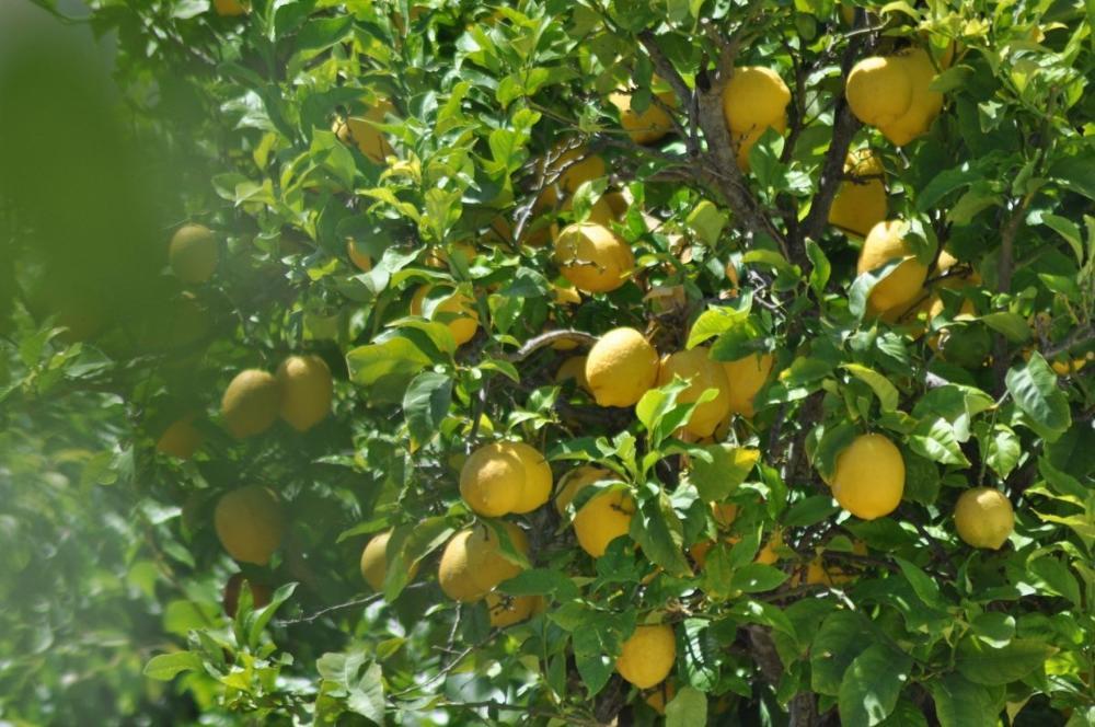 la pobla de montornès tarragona house foto 3798347