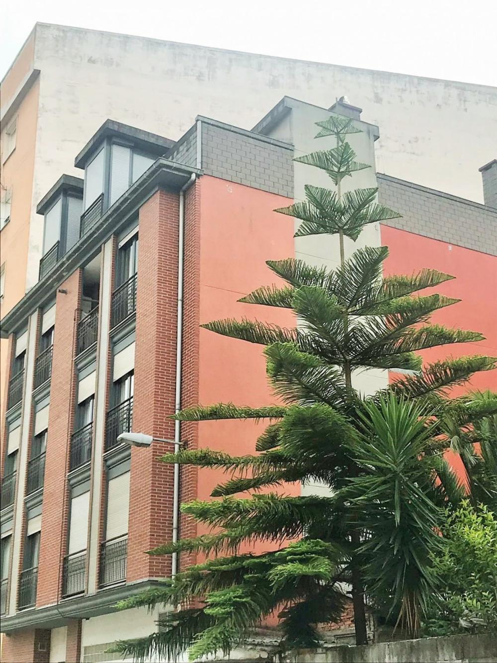 torrelavega cantabria duplex foto 3840397
