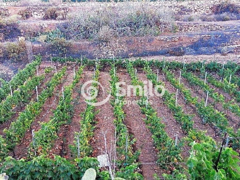 guía de isora tenerife boerderij foto 4632382