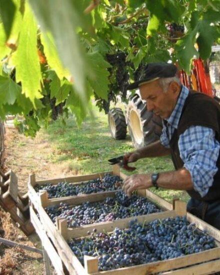 Image for Gardameer wijnwandeling 4 uur: alle groepen 2 t/m 12 personen