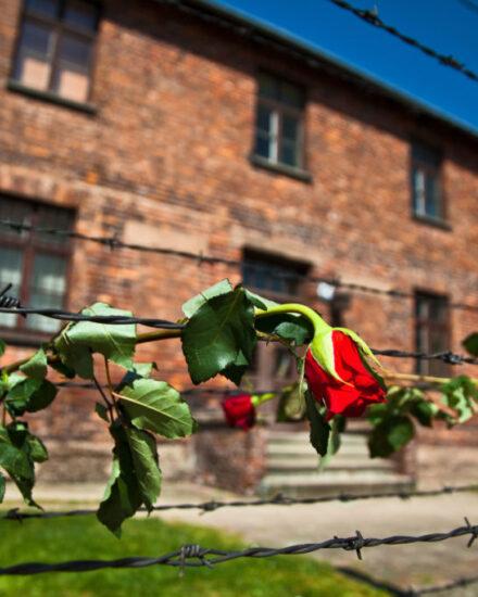 Image for Krakau & Auschwitz 4 dagen 4/49 personen