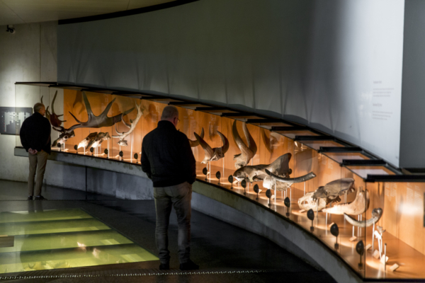 Veluwe museonder museum1